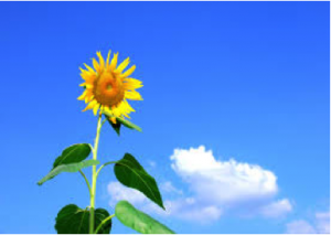Sunflower, Crisis in Leadership, Jon Freeman