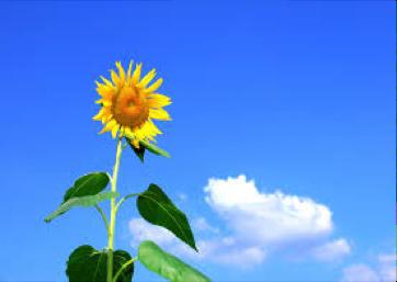 Sunflower, Crisis in Leadership, Jon Freeman